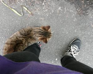 * 猫の気持ち *_f0146198_15141650.jpg