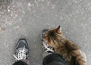* 猫の気持ち *_f0146198_15144493.jpg