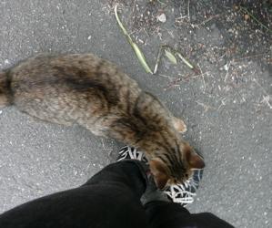 * 猫の気持ち *_f0146198_15155754.jpg
