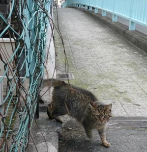 * 猫の気持ち *_f0146198_1525551.jpg