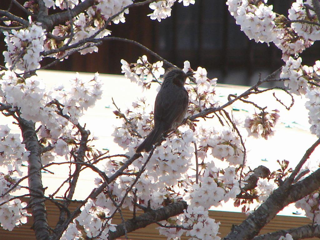 春来る_d0124199_17512841.jpg
