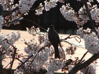 春来る_d0124199_17521198.jpg