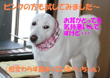 f0121712_1633979.jpg