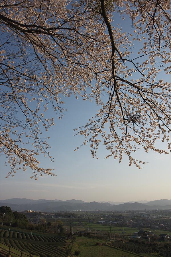 霞間ヶ渓の桜2008(岐阜県揖斐郡池田町)_c0115616_564778.jpg