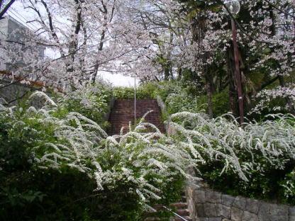 今年の桜風景_b0105719_16592037.jpg