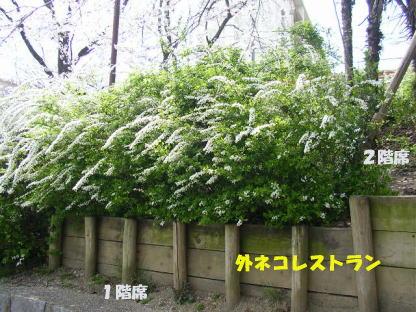 今年の桜風景_b0105719_173032.jpg