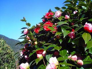 ああ、春、春、・・・_c0060919_1649414.jpg