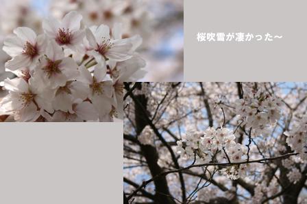 a0093825_6502785.jpg