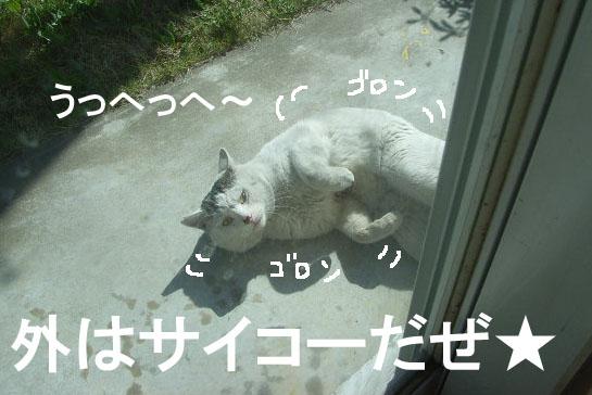 d0081025_19545437.jpg