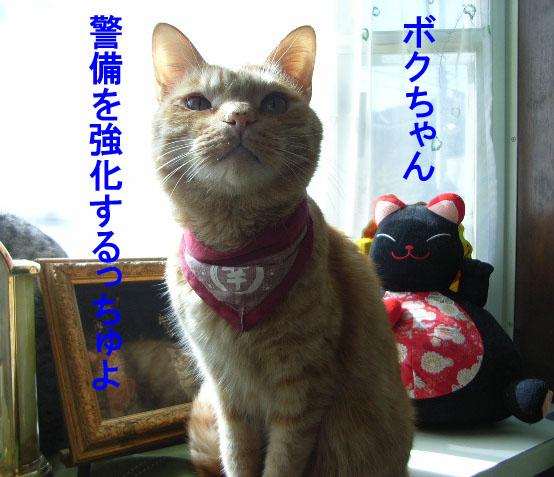 d0081025_20125371.jpg