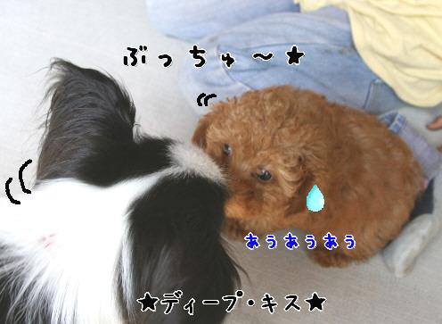 d0013149_0495337.jpg