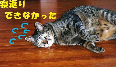 d0139352_0101312.jpg