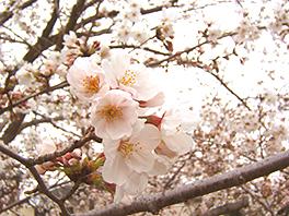 * 春は …_e0106552_1561892.jpg