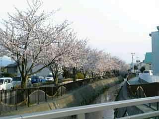 4/5 家の近くの桜並木。_e0066486_1726828.jpg