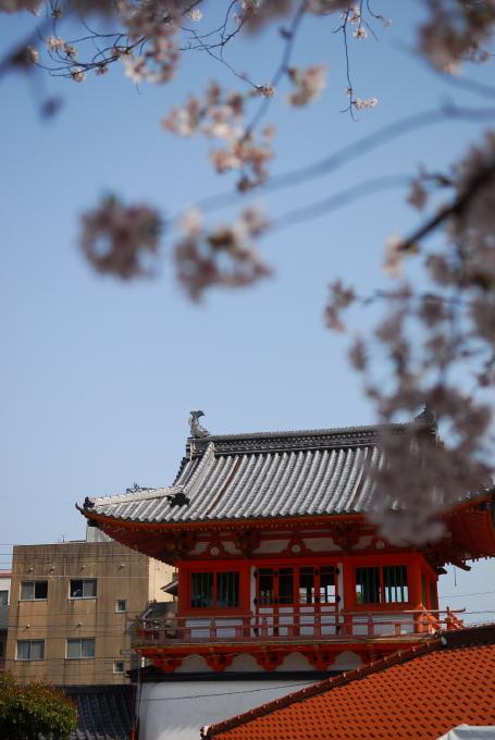 散る桜 残る桜も 散る桜_d0047811_2155268.jpg