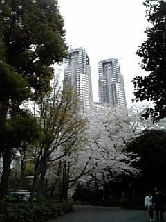 新宿中央公園の桜_c0103712_1293034.jpg