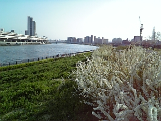 隅田川沿い_c0103712_22215420.jpg