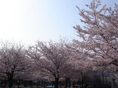 長居公園でプチお花見_c0073813_23371695.jpg