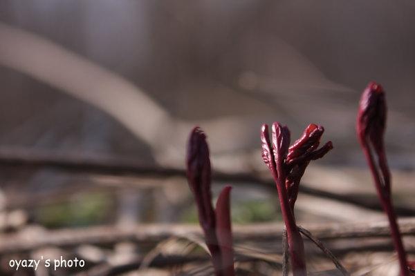 春は近い_a0071514_2115977.jpg