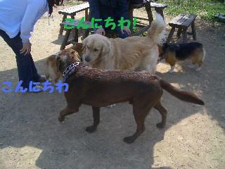e0136815_1823955.jpg