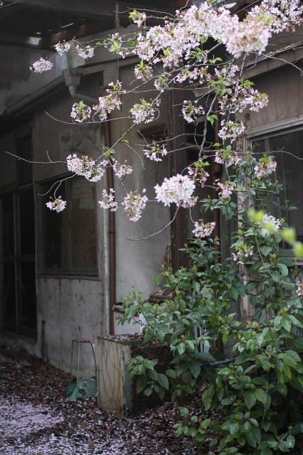 渋谷  散り際の美_b0061717_23394259.jpg