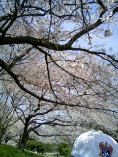 お花見タイム(家族篇)_d0004717_12174385.jpg
