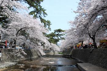 桜三昧_e0103024_1318560.jpg