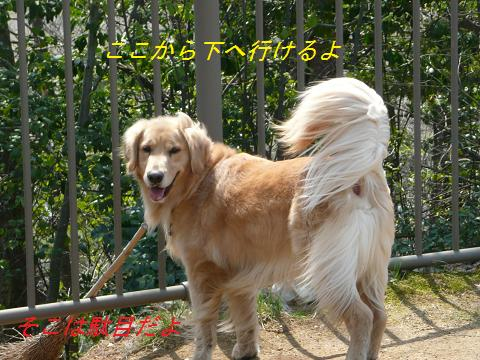 f0114128_20113883.jpg