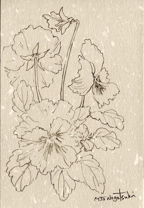 パンジーⅡ~水彩画~_b0089338_16462199.jpg