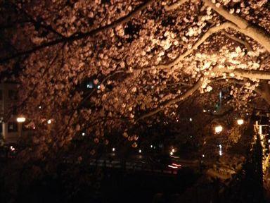 福井城址の夜桜ライトアップ_d0079440_211017.jpg