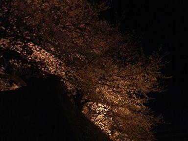 福井城址の夜桜ライトアップ_d0079440_21122770.jpg