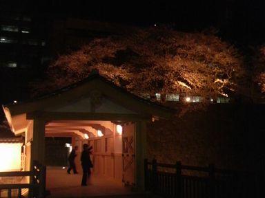 福井城址の夜桜ライトアップ_d0079440_211434.jpg
