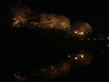 福井城址の夜桜ライトアップ_d0079440_2115157.jpg