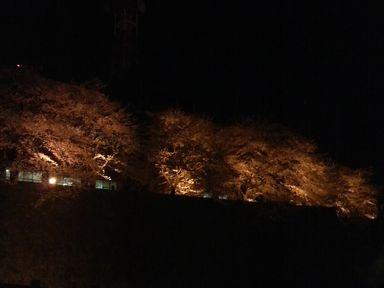 福井城址の夜桜ライトアップ_d0079440_21171650.jpg