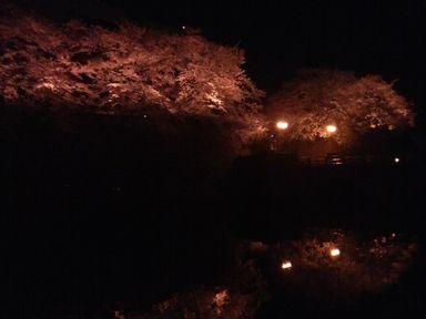 福井城址の夜桜ライトアップ_d0079440_2124682.jpg