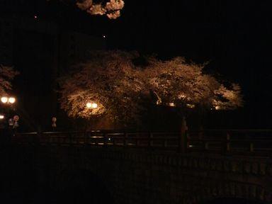 福井城址の夜桜ライトアップ_d0079440_2131249.jpg