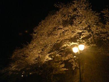福井城址の夜桜ライトアップ_d0079440_2141086.jpg