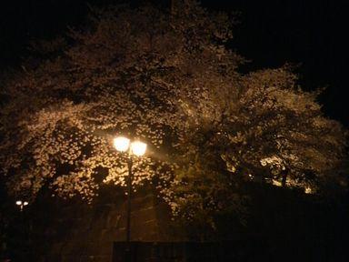 福井城址の夜桜ライトアップ_d0079440_214336.jpg