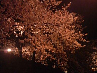 福井城址の夜桜ライトアップ_d0079440_2165597.jpg