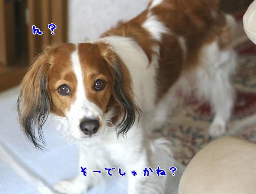 d0013149_113116.jpg