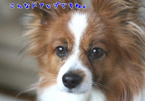 d0013149_117241.jpg
