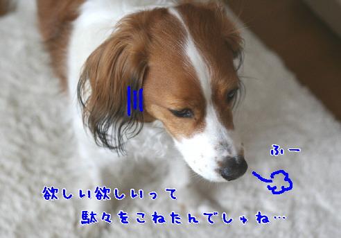 d0013149_16547.jpg