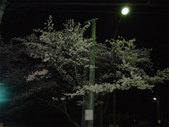 本番前の夜桜_c0110051_0355017.jpg