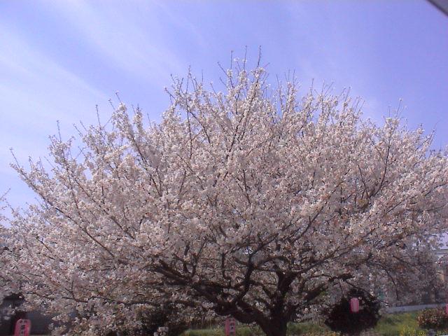 富士山と桜と。_e0060555_0125237.jpg