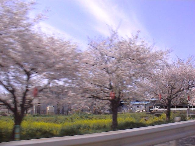 富士山と桜と。_e0060555_013207.jpg