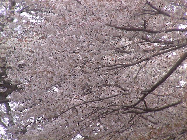 富士山と桜と。_e0060555_0212284.jpg