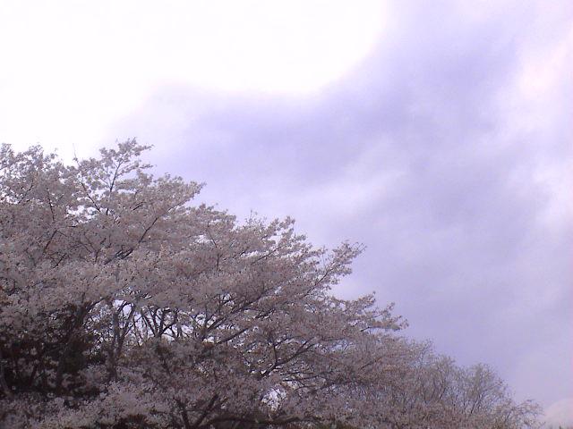 富士山と桜と。_e0060555_022397.jpg