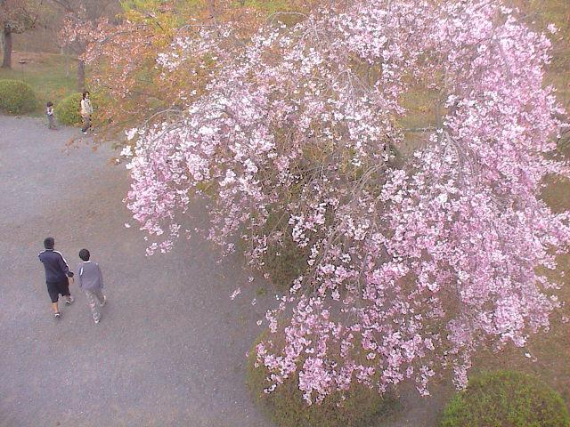 富士山と桜と。_e0060555_0291835.jpg