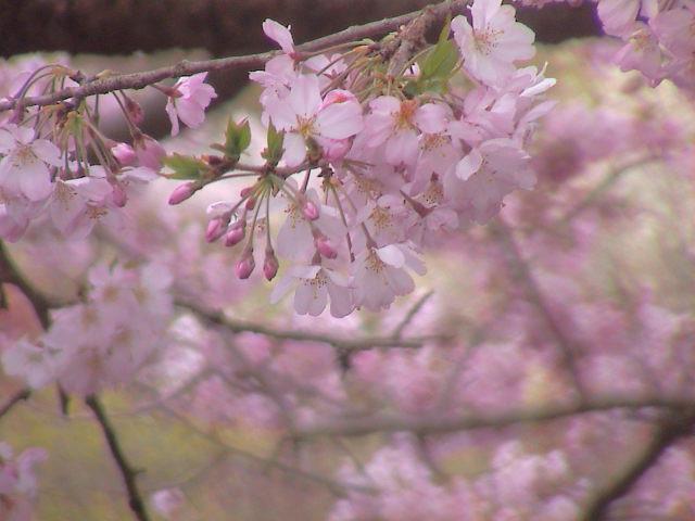 富士山と桜と。_e0060555_0354596.jpg