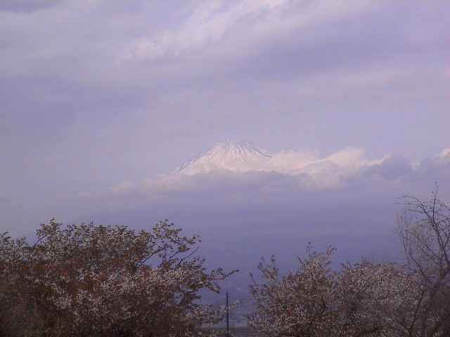 富士山と桜と。_e0060555_039690.jpg